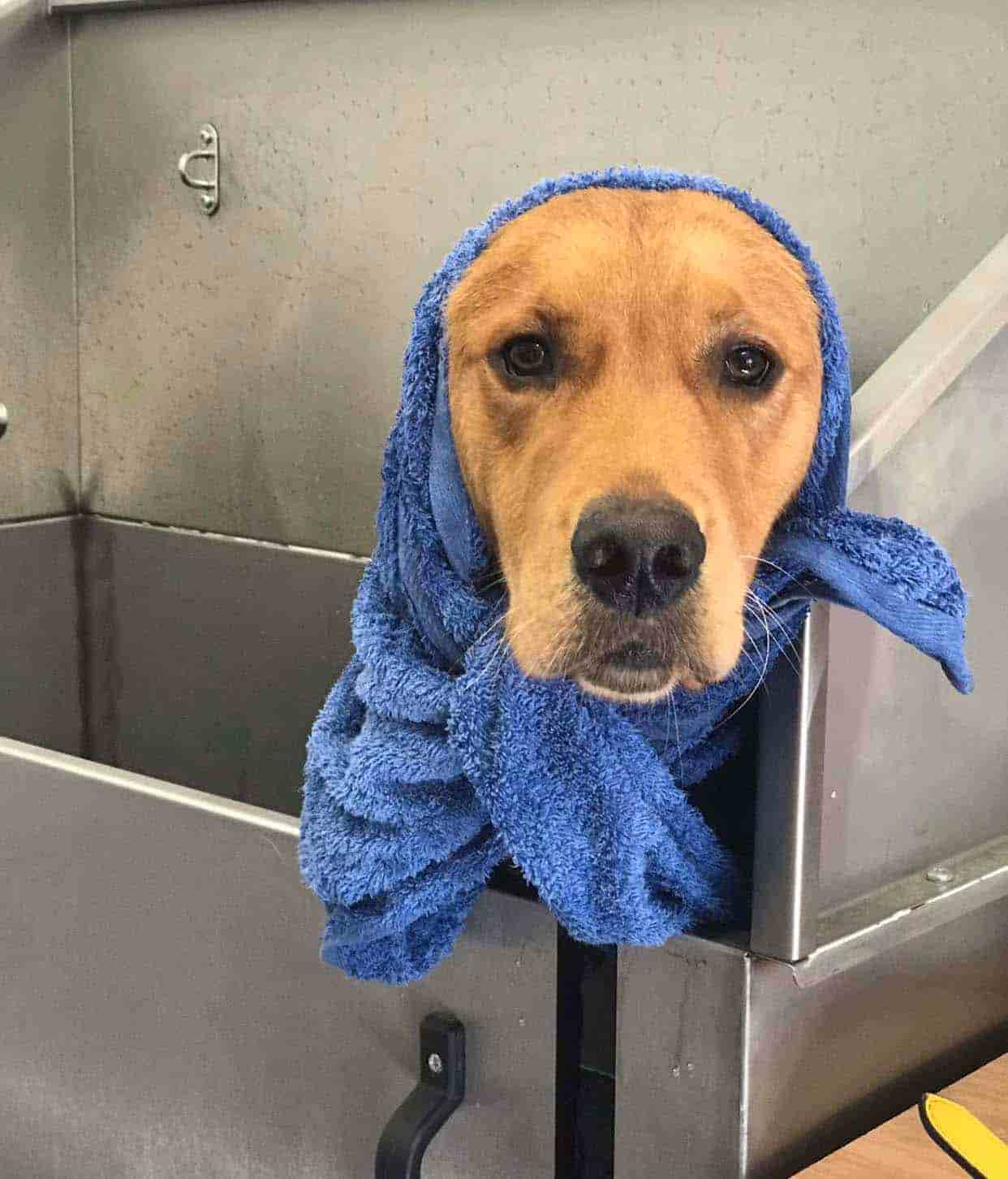 dog having the wash and go treatment